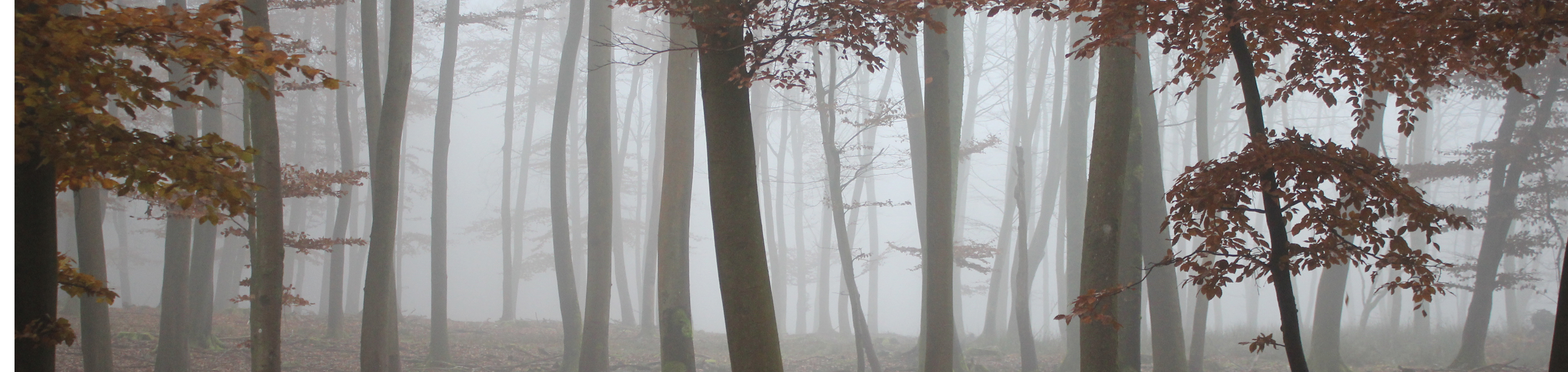 New-Forest_1
